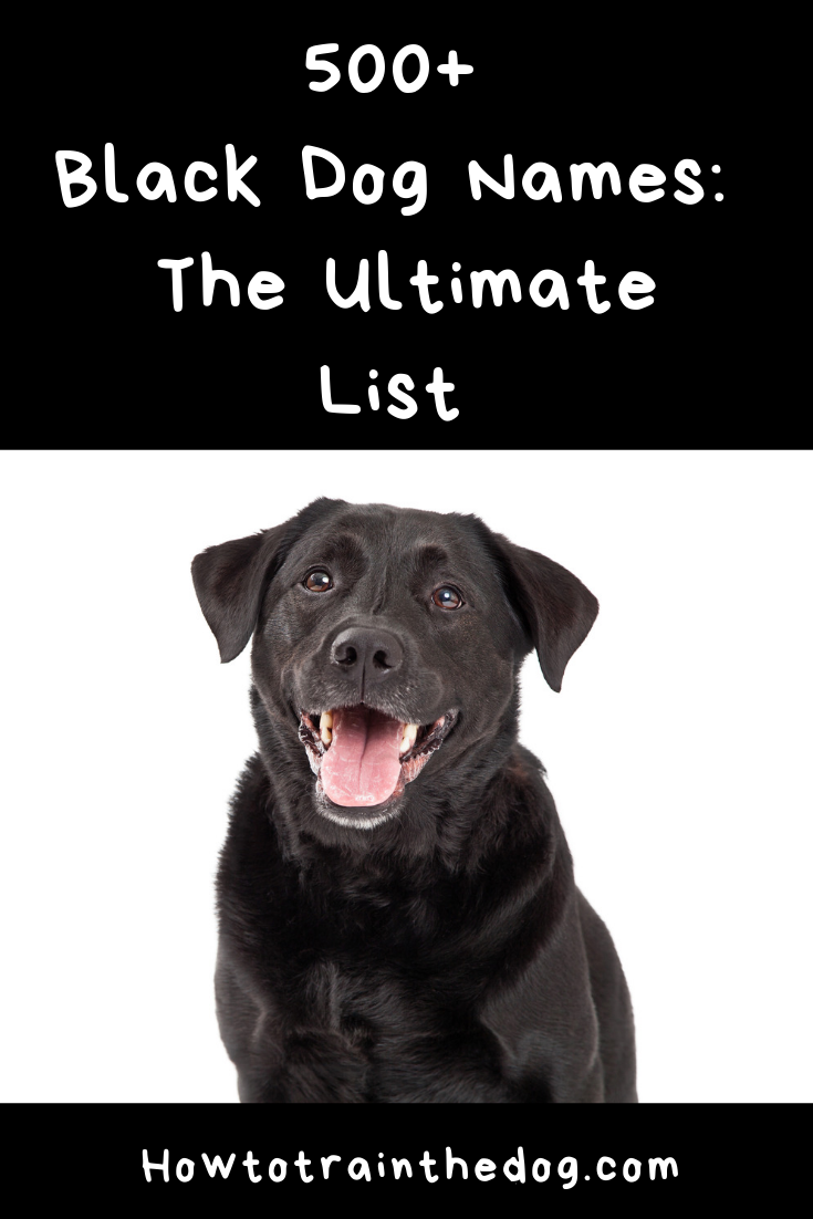 Black Dog Names 500 Awesome Ideas For Black Furbabies Dog Names Black Dog Names Best Dog Names