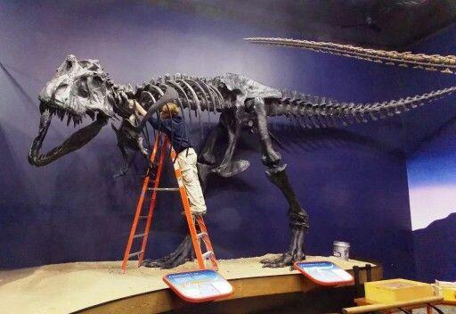 Réplique du T-rex AMNH, au Burpee Museum of Natural History