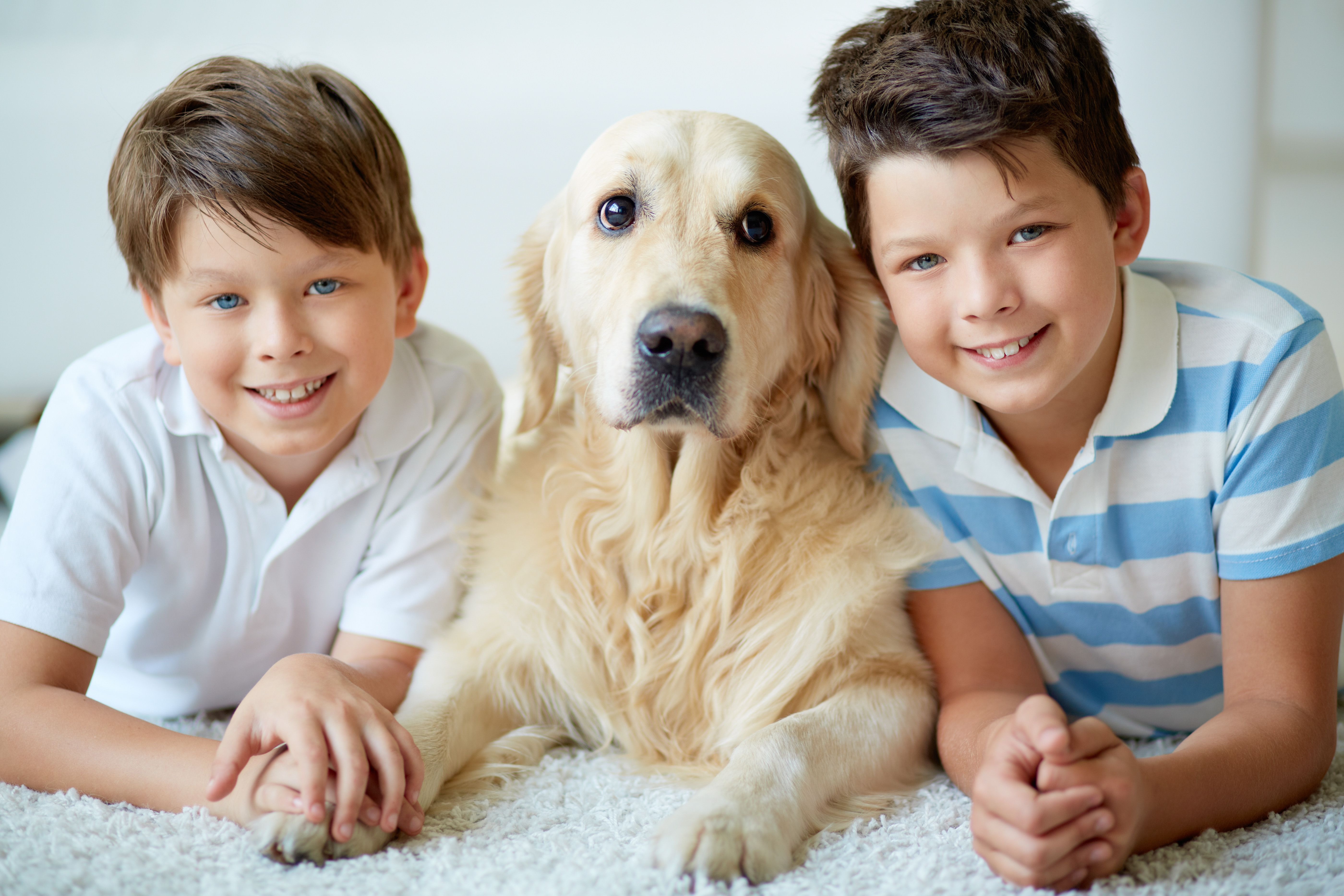 Cheese Pets Dog Family Child Friendly Dogs Low Maintenance