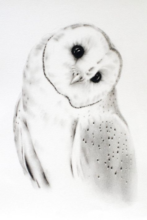 Charcoal Drawing Original 11x14 Barn Owl Art Owl Sketch Barn Owl