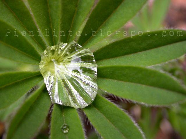 Pieni Lintu: After the rain