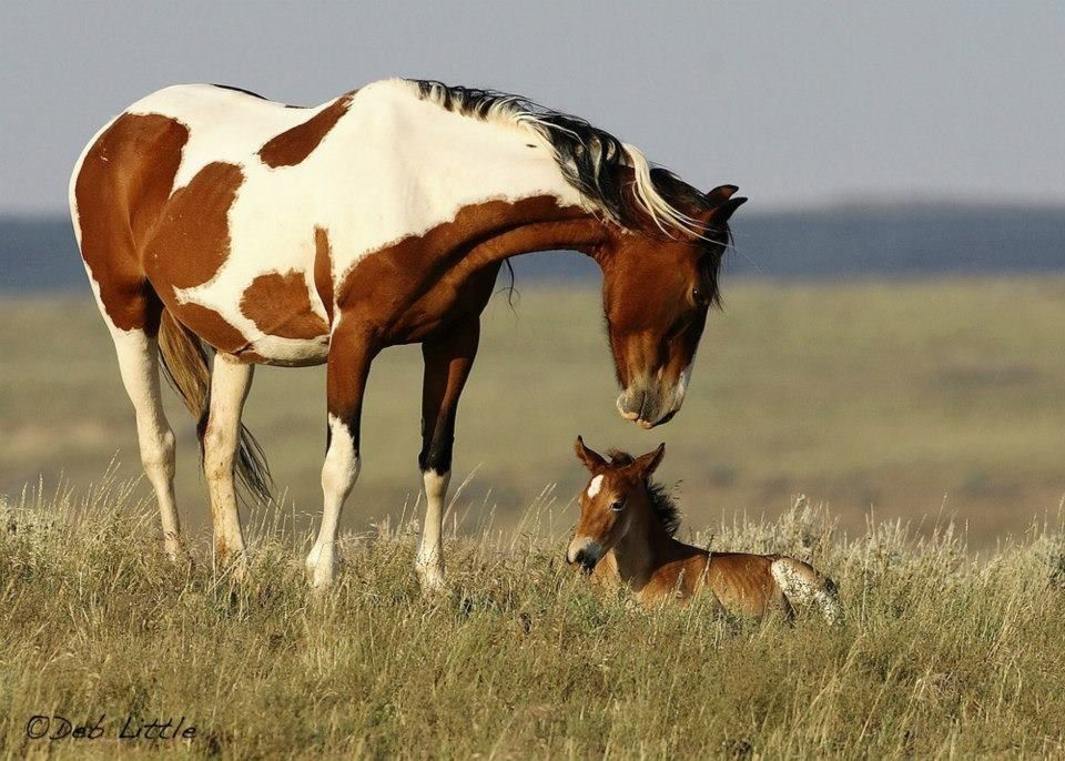 Image result for wild baby horses pinterest