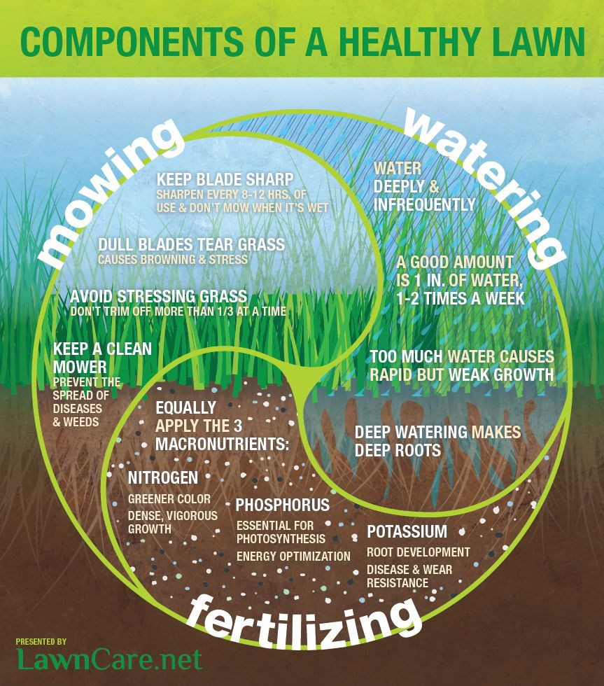Benefits Of A Well Maintained Lawn Healthy Lawn Lawn Care Tips Lawn Care