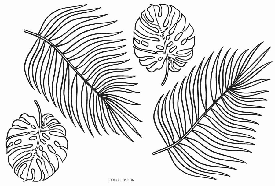 32 Palm Leaf Coloring Page Leaf Coloring Page Leaf Coloring