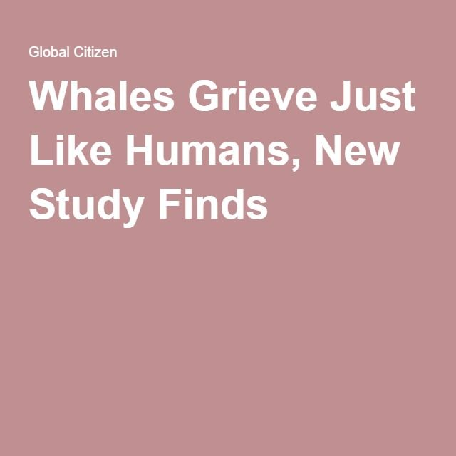 Whales Grieve Just Like Humans, New Study Finds
