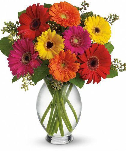 Gerbera Daisy Vase Flower Arrangements Flowers Gerbera Bouquet
