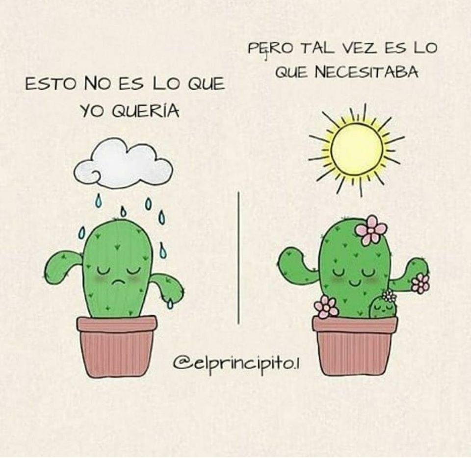 Qué necesitas? | Frases de cactus, Frases positivas, Frases mágicas