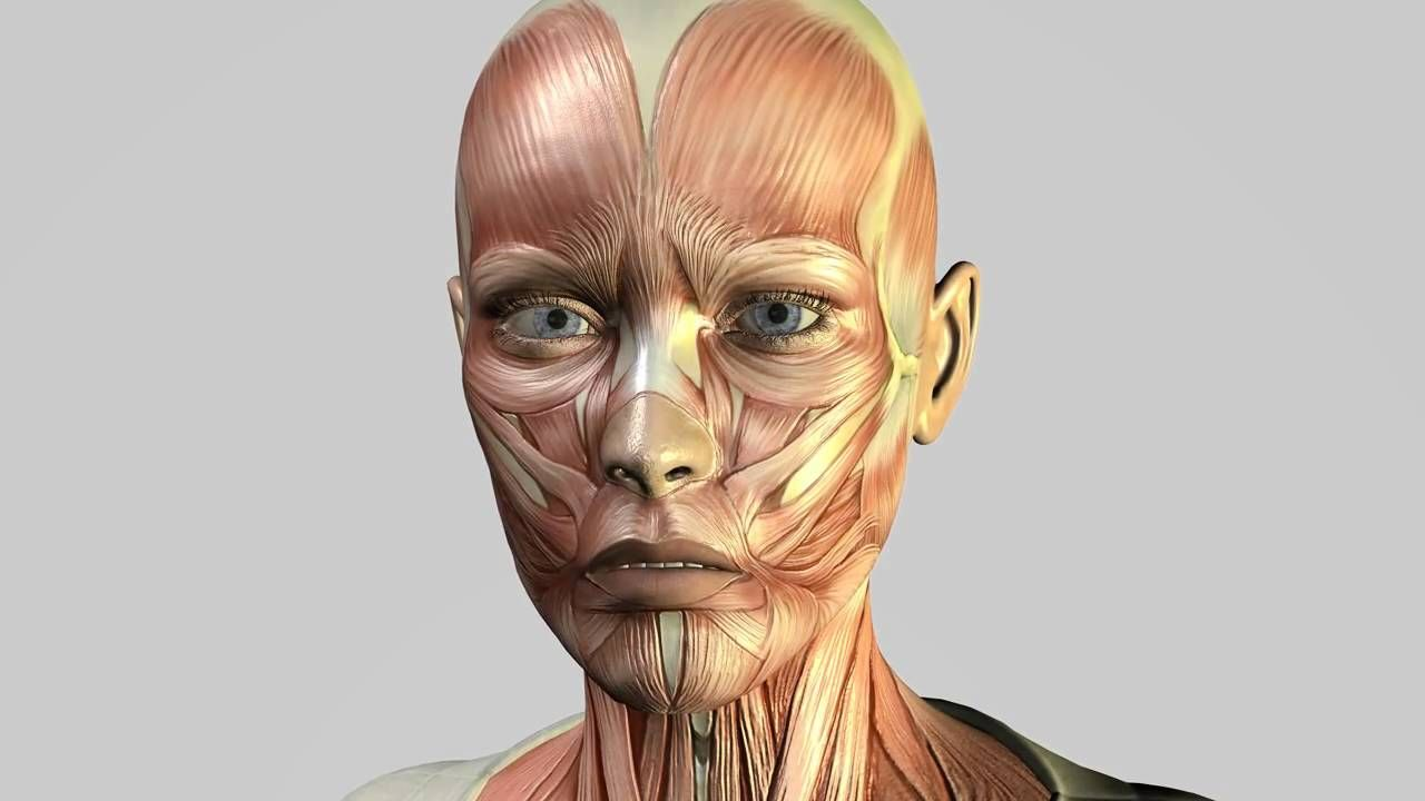 Facial Muscles Moving Gii Phux Pinterest Facial Muscles