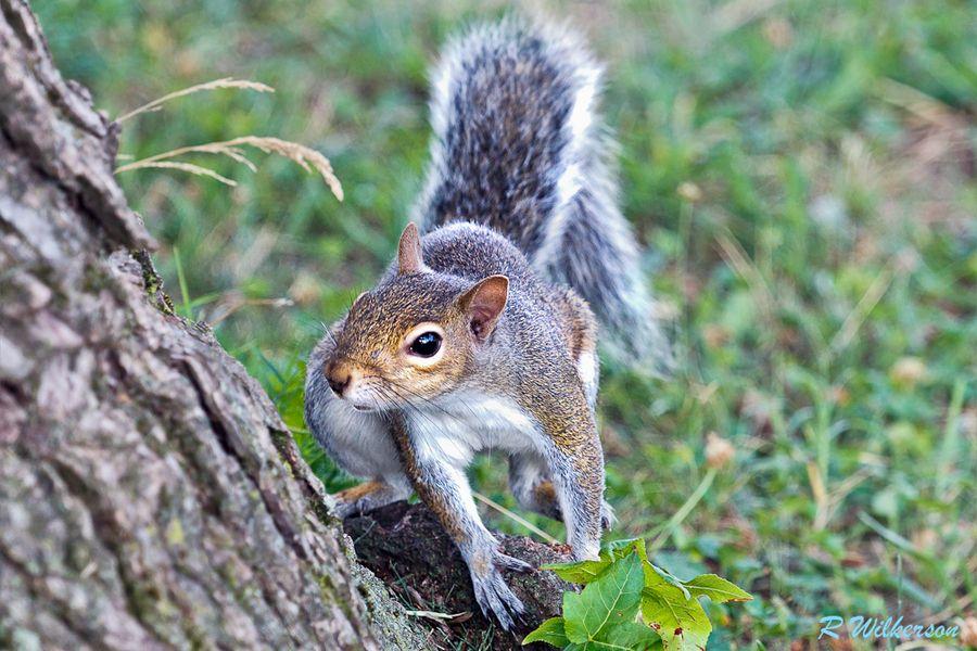 Squirrel of My Dreams  #500px #squirrel #animals #photography