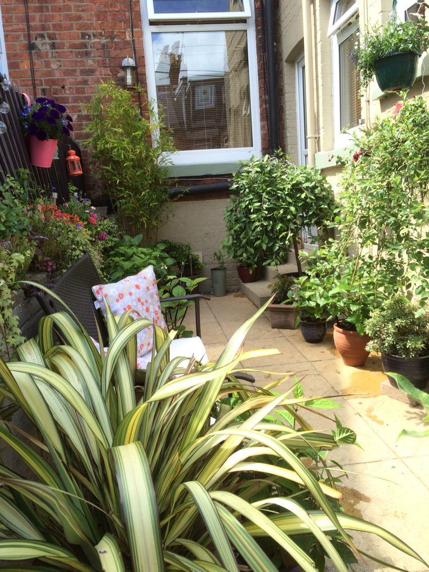 My yard , Victorian terrace yard  Small gardens, Small garden