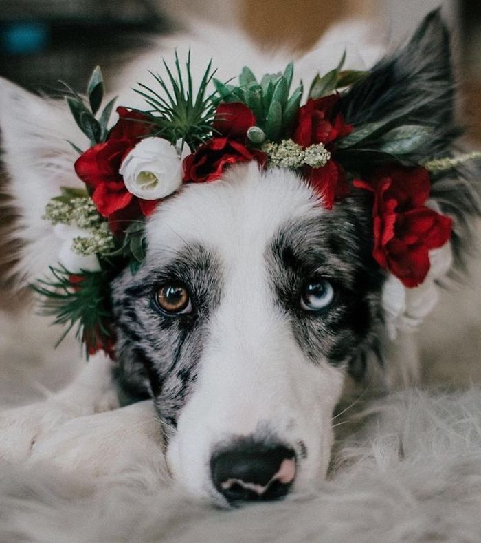 Photo of Flower Crown Cat Dog