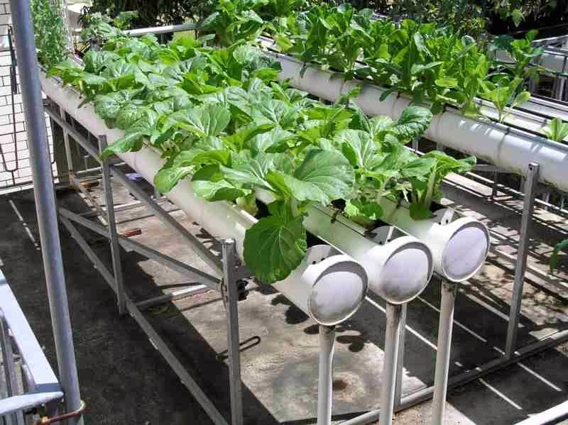 Best Way To Grow Hydroponic Plants