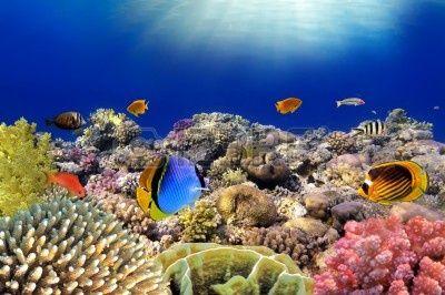 58 Ideas De Arrecifes Coral Arrecife De Coral Arrecifes De Coral