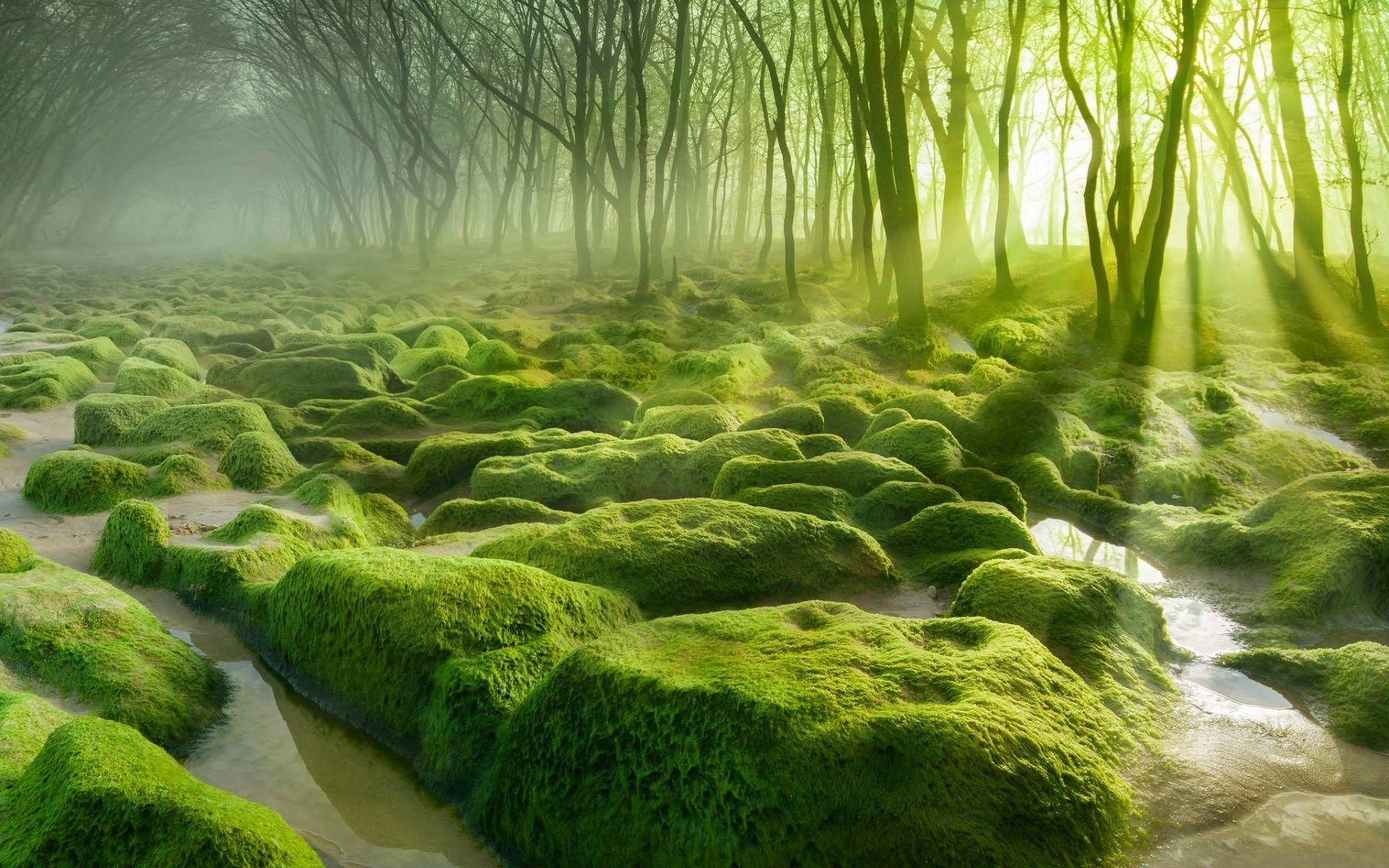 1920x1200 High Resolution Wallpaper moss | Forest ...