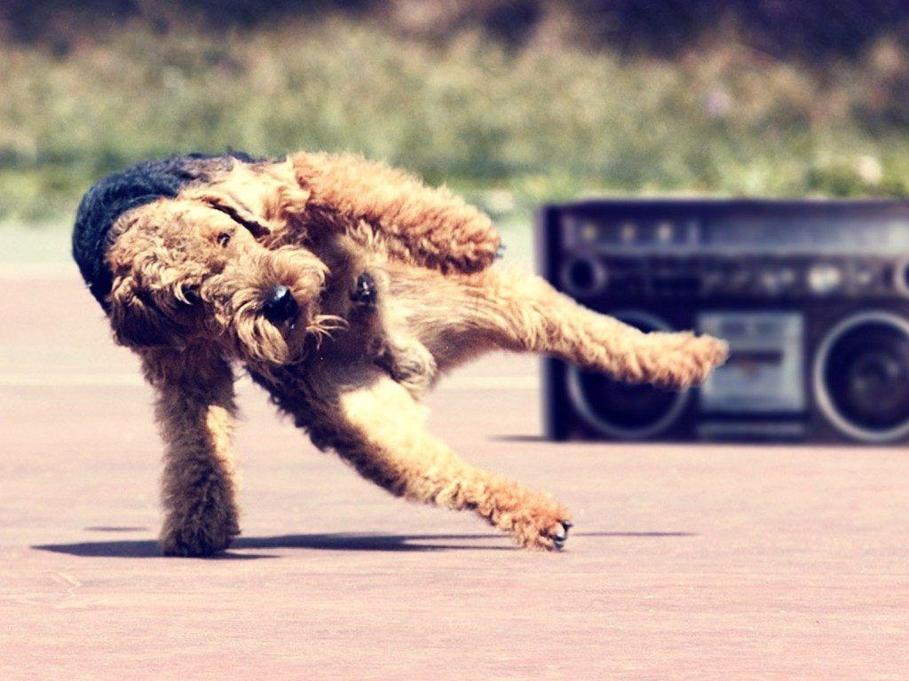 10 Gifs De Perritos Bailando Para Alegrarte El Dia Perro Bailando Memes De Animales Divertidos Perros