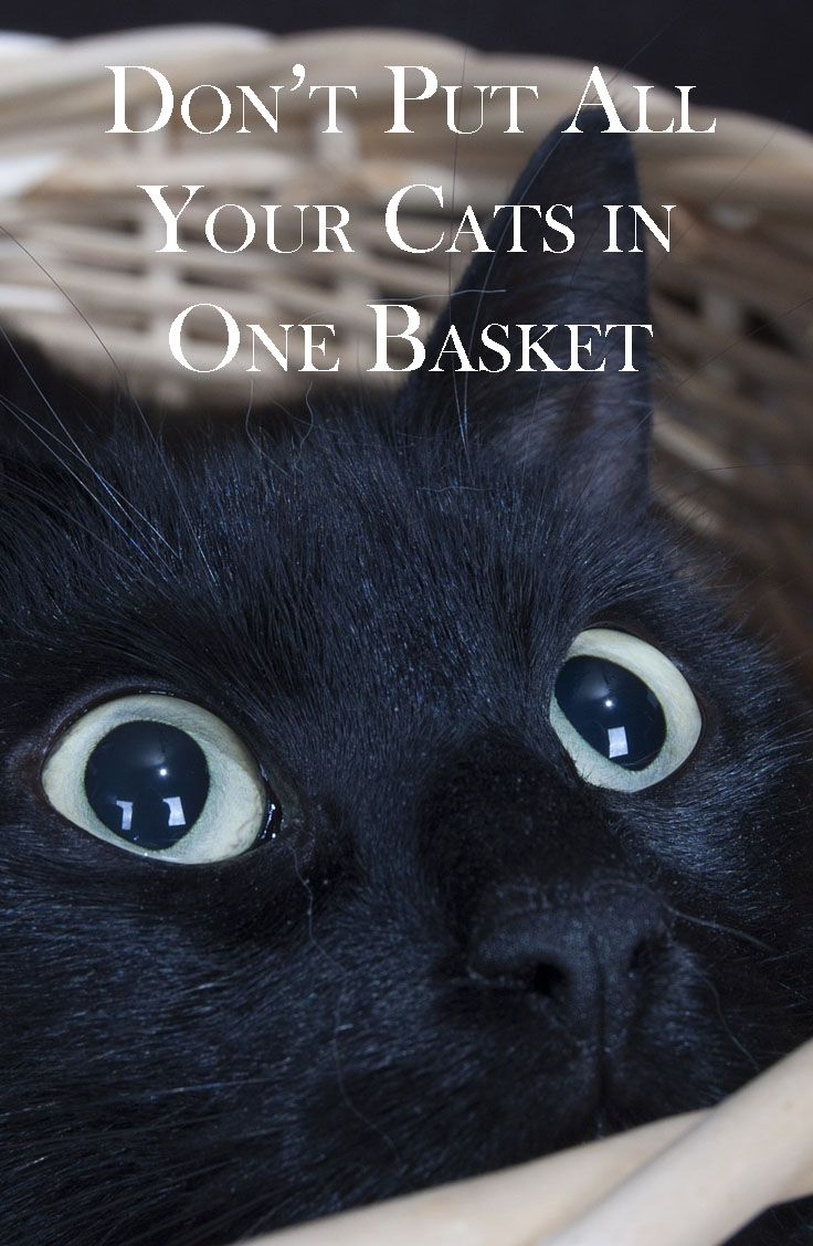 Sarcastic Cat Quotes Cat Memes Book Series Cozy Conundrums Humor Barry Funny Cat Memes Hilarious Cat Memes Cats Fu Funny Cat Memes Cat Memes Cat Quotes