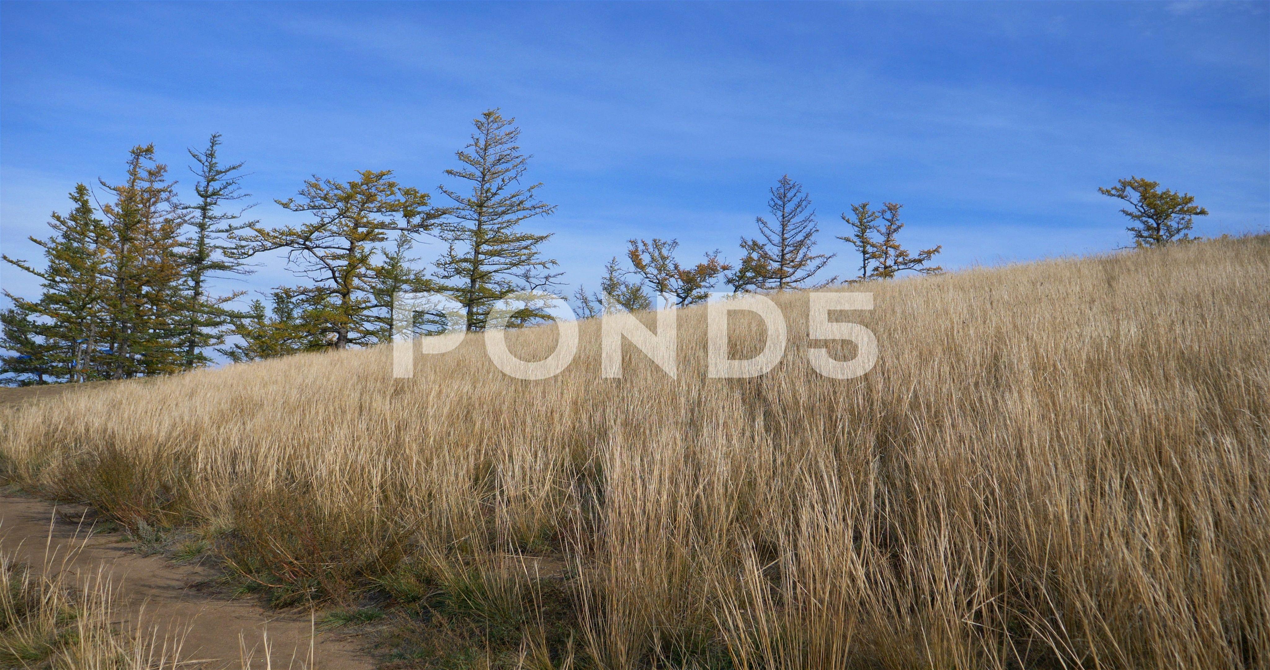 Landscape Nature Grass