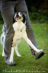 Dog Training Clicker Training Free Video List Tips Tutorials Dog