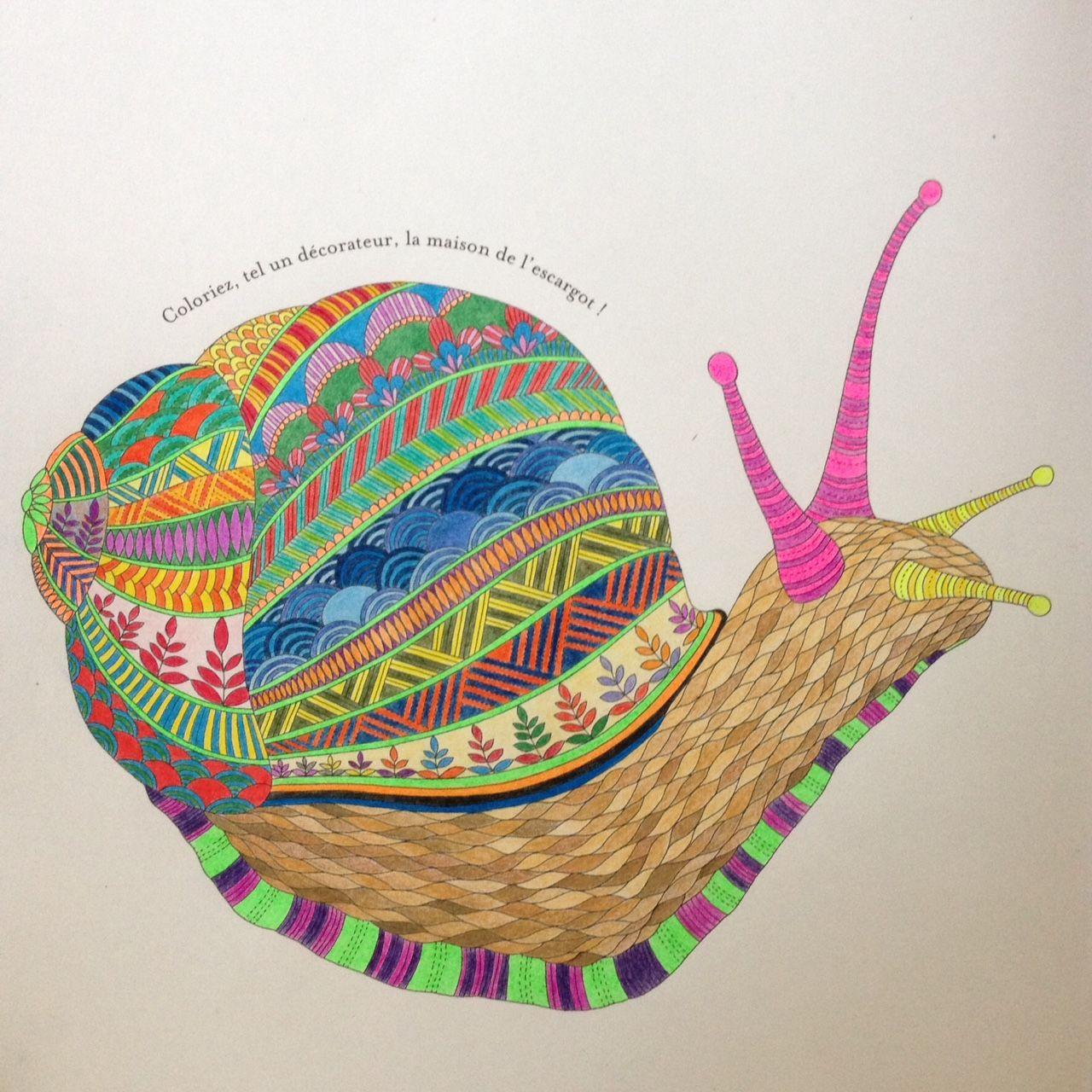 Animal Kingdom Colouring Book Google Search