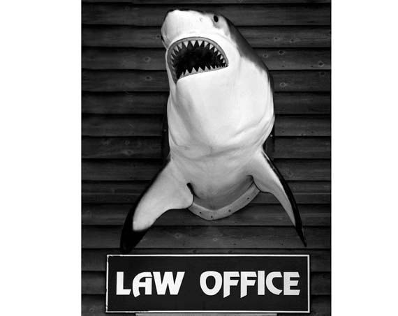 Image result for shark as attorney