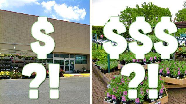 Be A Smart Plant Per Part 2 Box Vs Local Nursery When