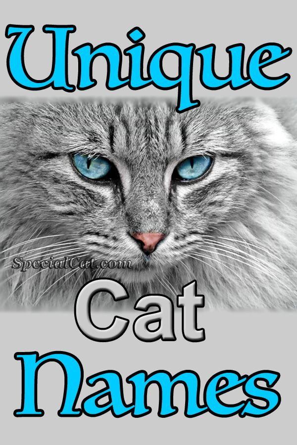 Charmingly Unique Cat Names With Meanings and/or