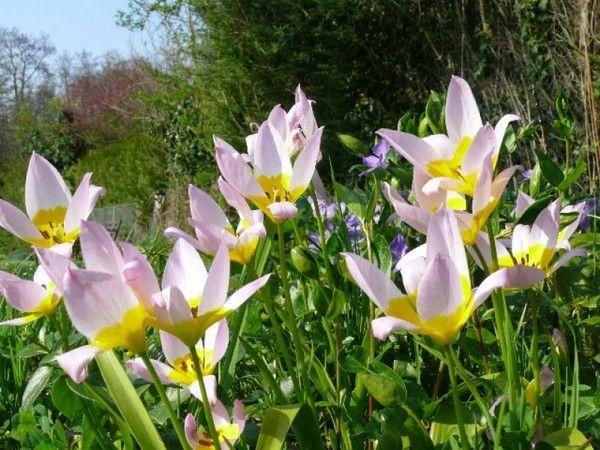 paysages printemps t fleurs sauvages fleurs sauvages pinterest fleurs sauvages. Black Bedroom Furniture Sets. Home Design Ideas