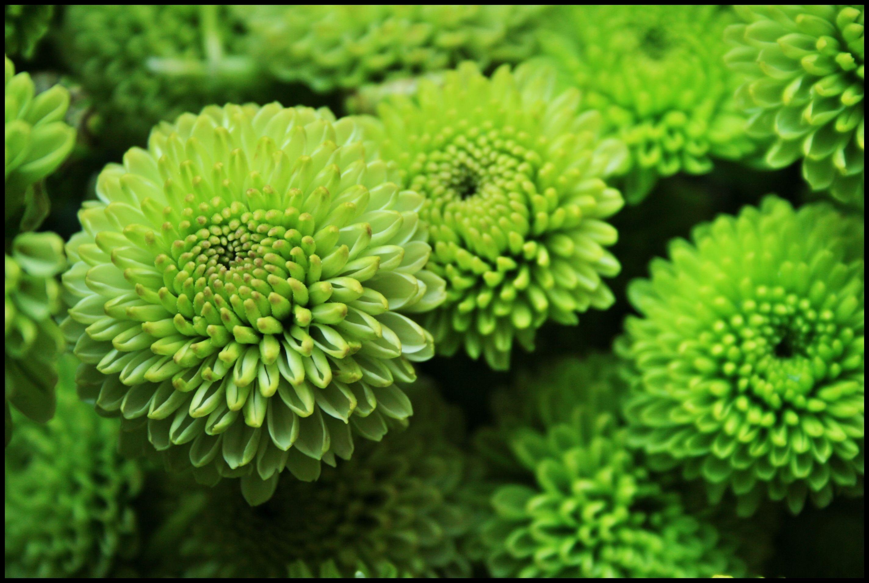 Зеленые картинки цветы