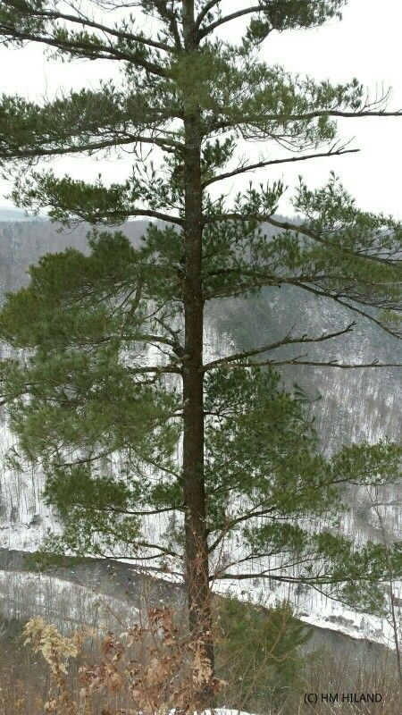 PA Grand Canyon 12-13-14