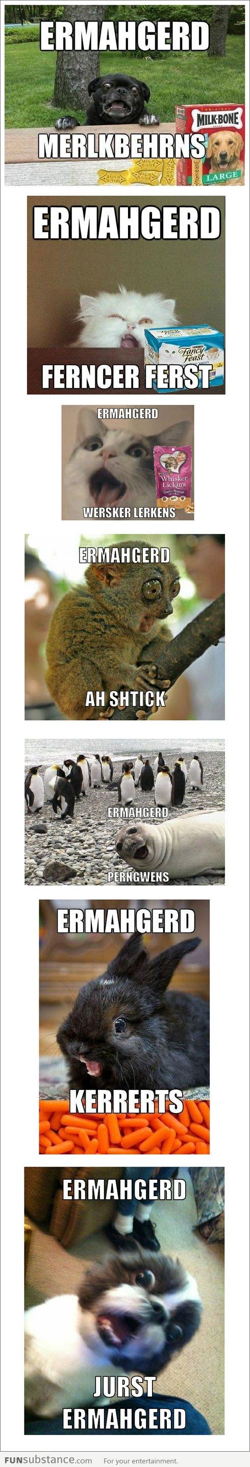 """Super Excited """"Ermahgerd"""" Animals"""