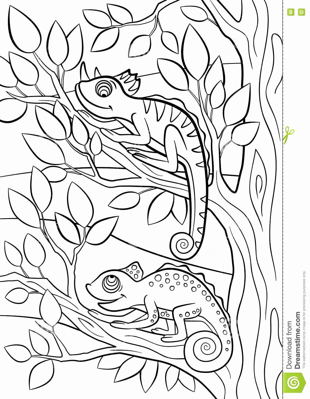 Animal Coloring Book Pages Inspirational Coloring Pages