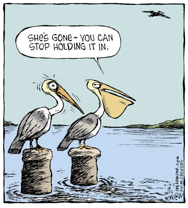 Pelican't let it go. | Much #funny. Very #humor. | Speed ...