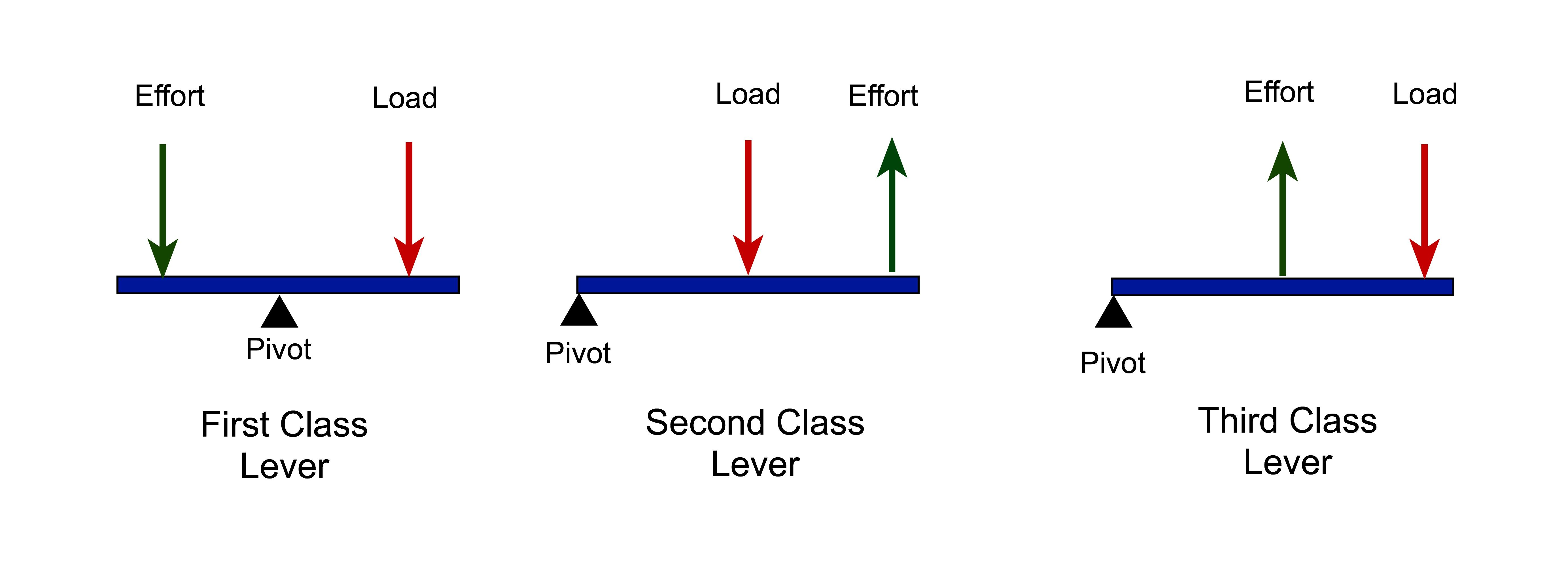 In a first class lever the fulcrum is in the middle of the effort in a first class lever the fulcrum is in the middle of the effort ccuart Choice Image