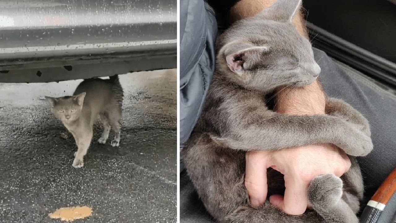Stray Kitten Walks Up To A Man Asking For Help And Won T Let Go Grey Cat Names Cat Spray Cute Kitten Gif