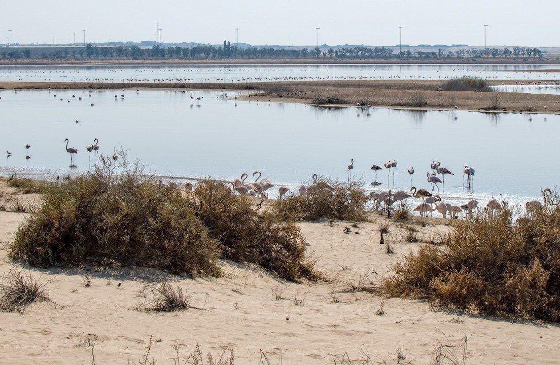Wildlife in Abu Dhabi: Al Wathba Wetland Reserve | Abu dhabi ...