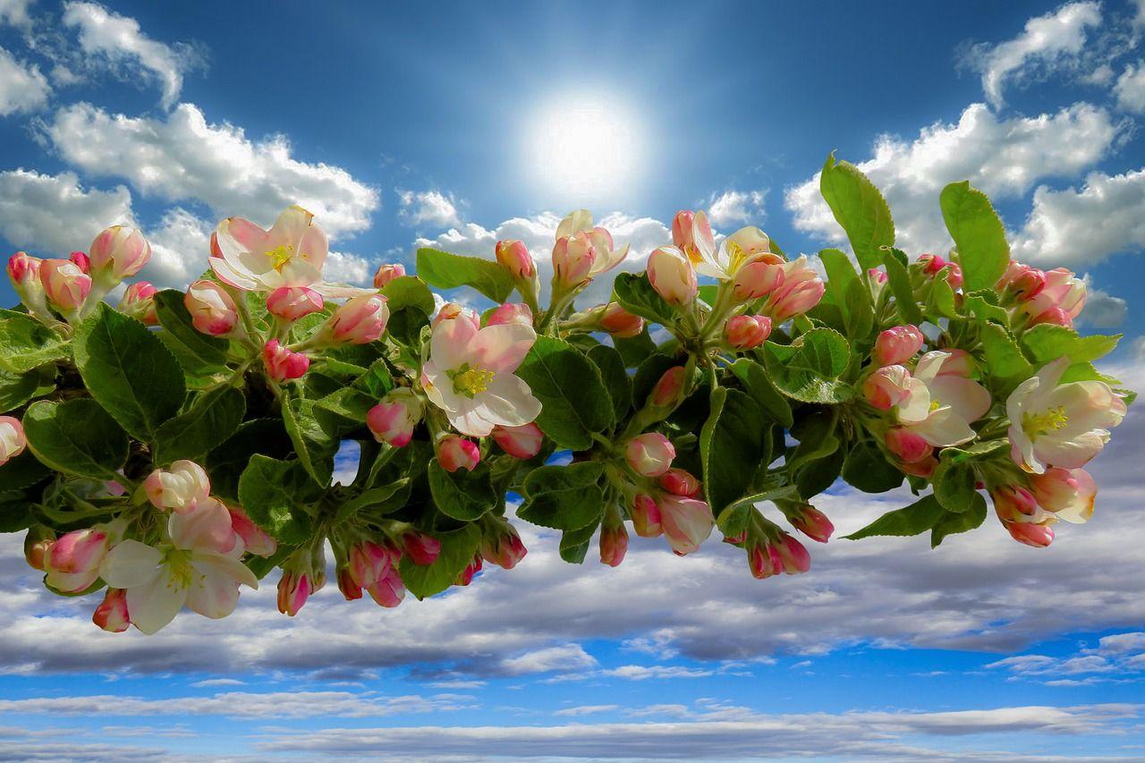 хотя красивые открытки про весну и солнышко этих условия