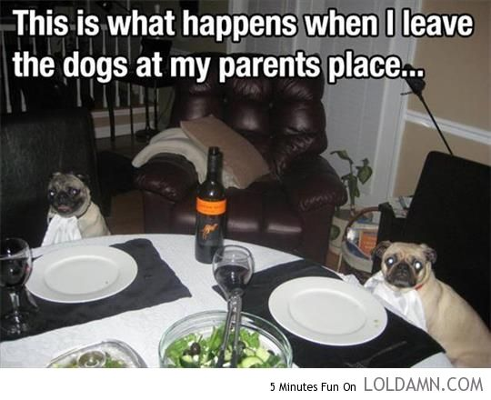 Parents know how to take care of your dogs. | Funny pictures and Awesome photos