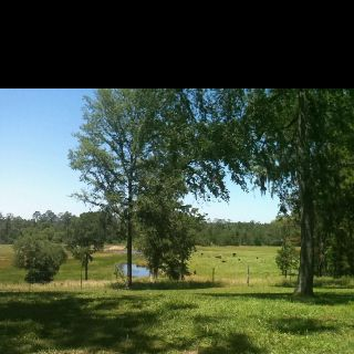 In Lufkin laying out enjoying the view...