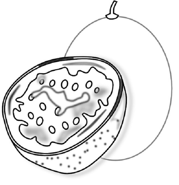 Passion Fruit Coloring Page Fruit Coloring Pages Free Food Fruit