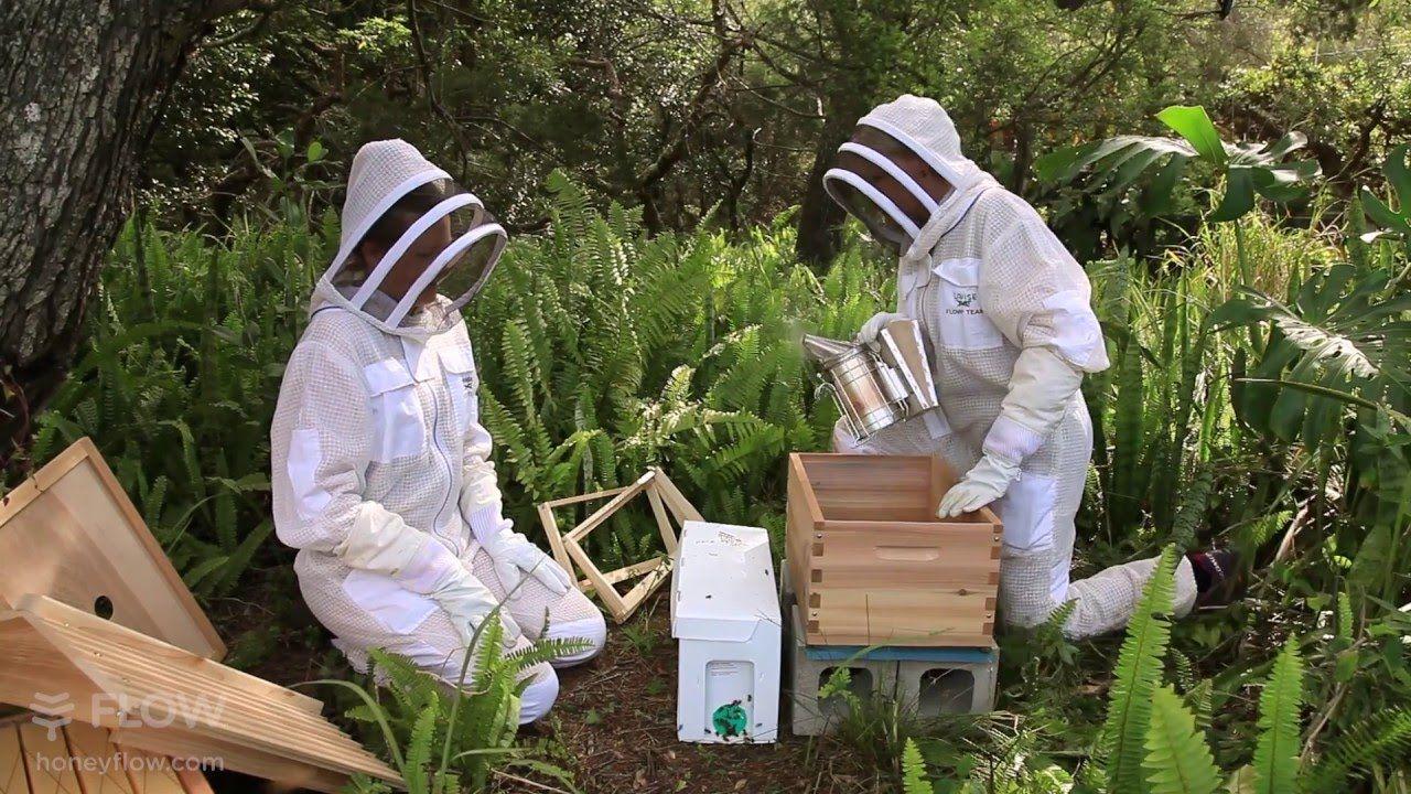 Beginner Beekeeping Ep 6