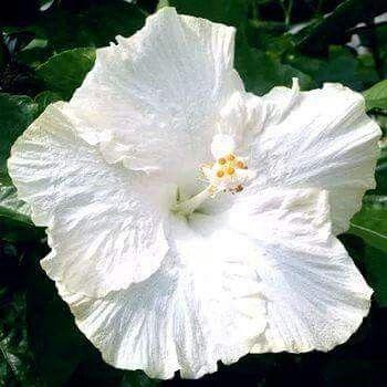 Beautiful White Bloom