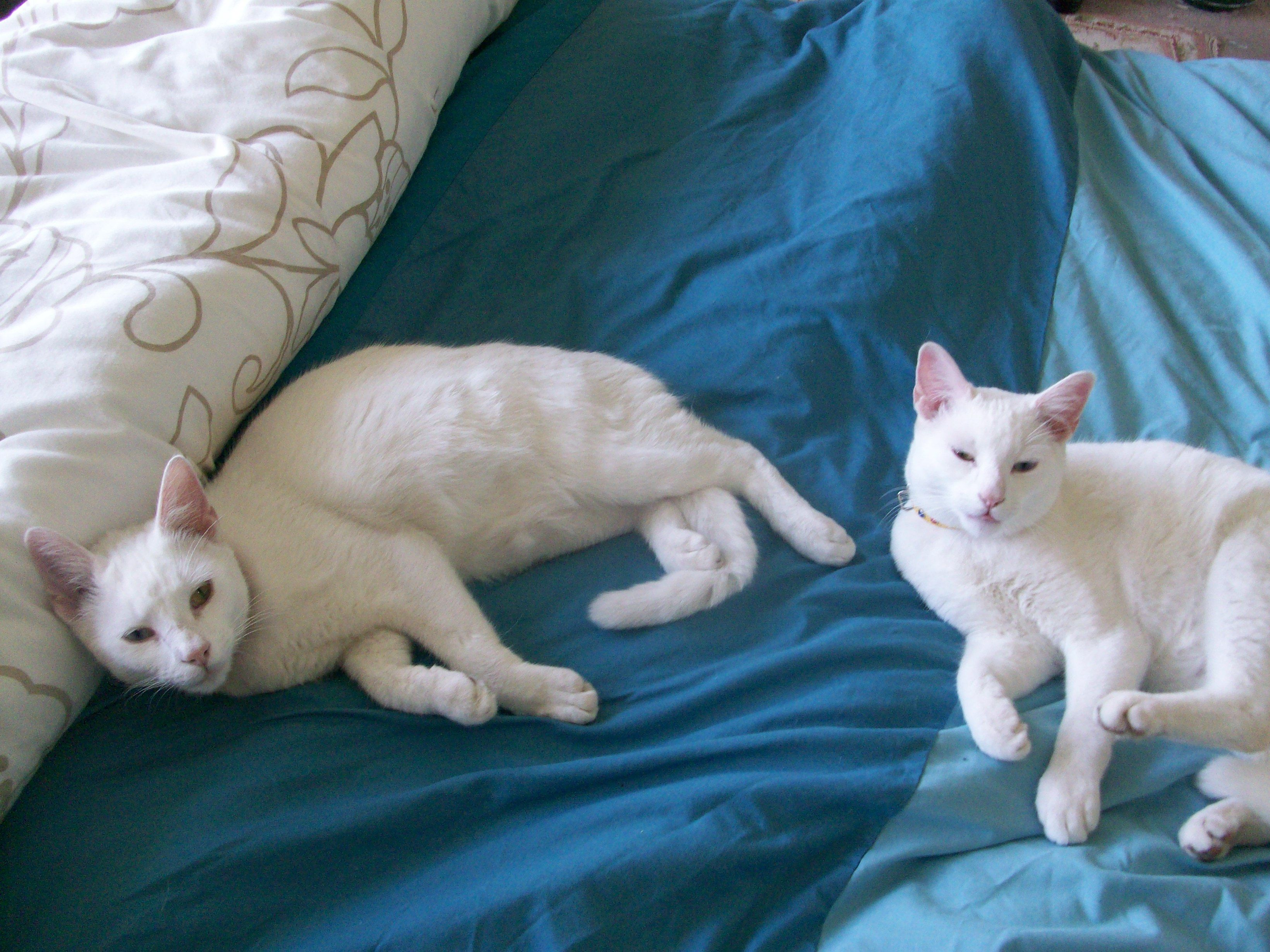 snowy and bowie