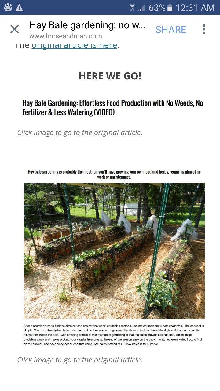 8f6d2d6d5f5b84932abe1101c71dc29b - Hay Bale Gardening Effortless Food Production