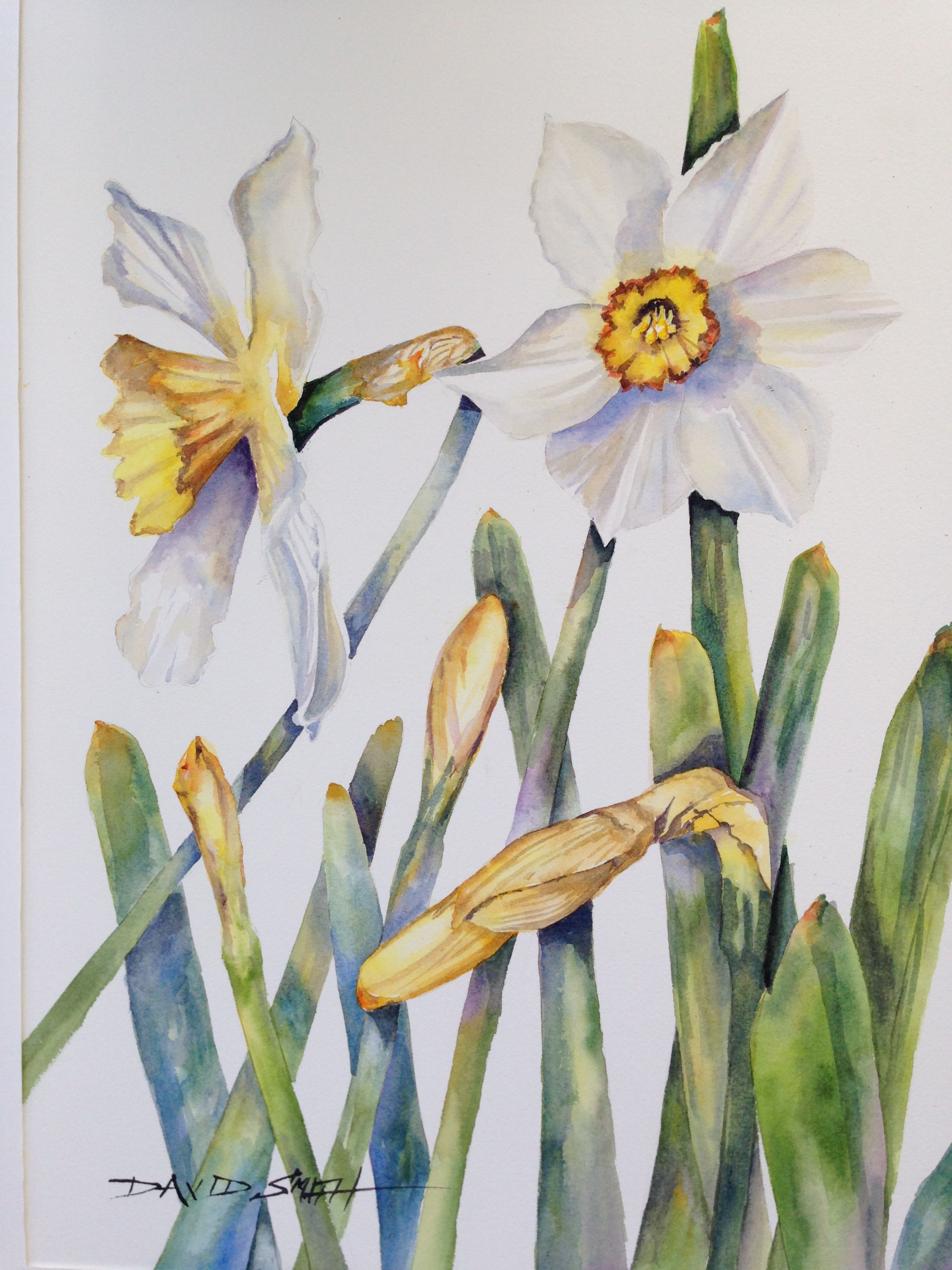 Daffy Watercolor By David Smith Go To Island Boy Studio On Facebook Flower Painting Watercolor Cards Art