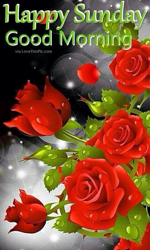 Happy Sunday Good Morning Roses Good Morning Sunday Sunday Quotes