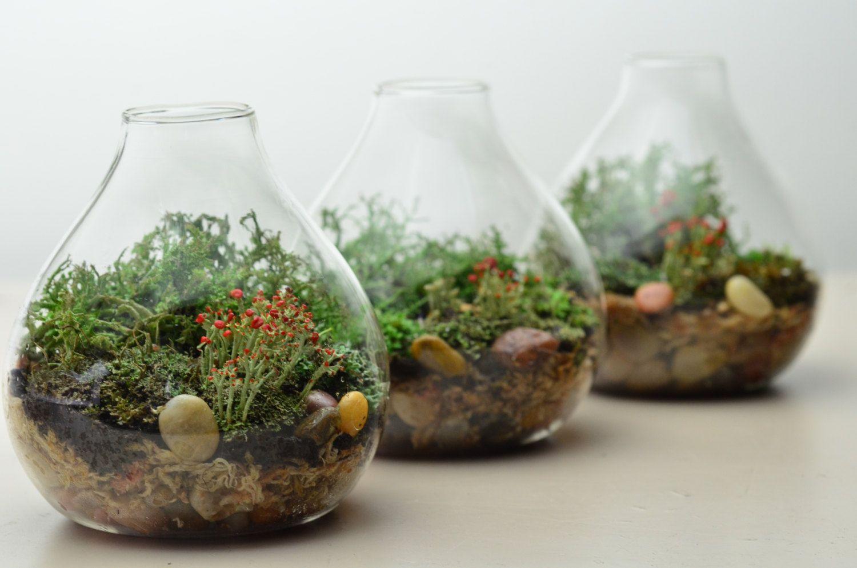 Decorare le damigiane di vetro con piccoli giardini in ...