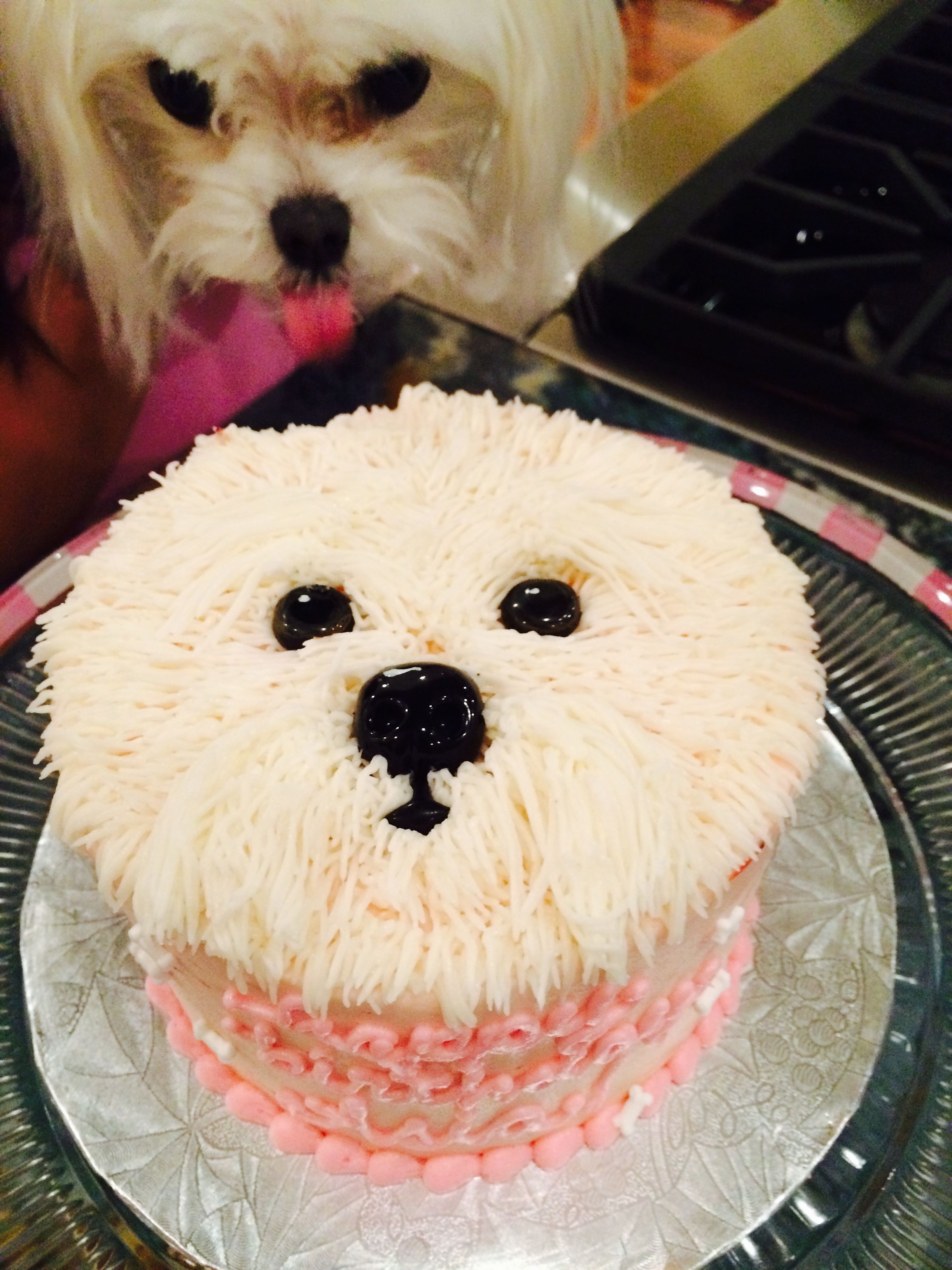 Maltese Cake Happy Birthday Asia Puppy Cake