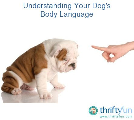 This guide is about understanding your dog's body language. Although your dog doesn't know everything you say, it can read your body language. You too, can learn to understand their postures and reactions.
