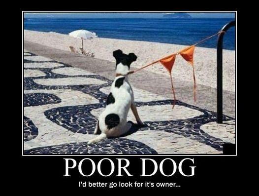 poor dog - Motivational Poster