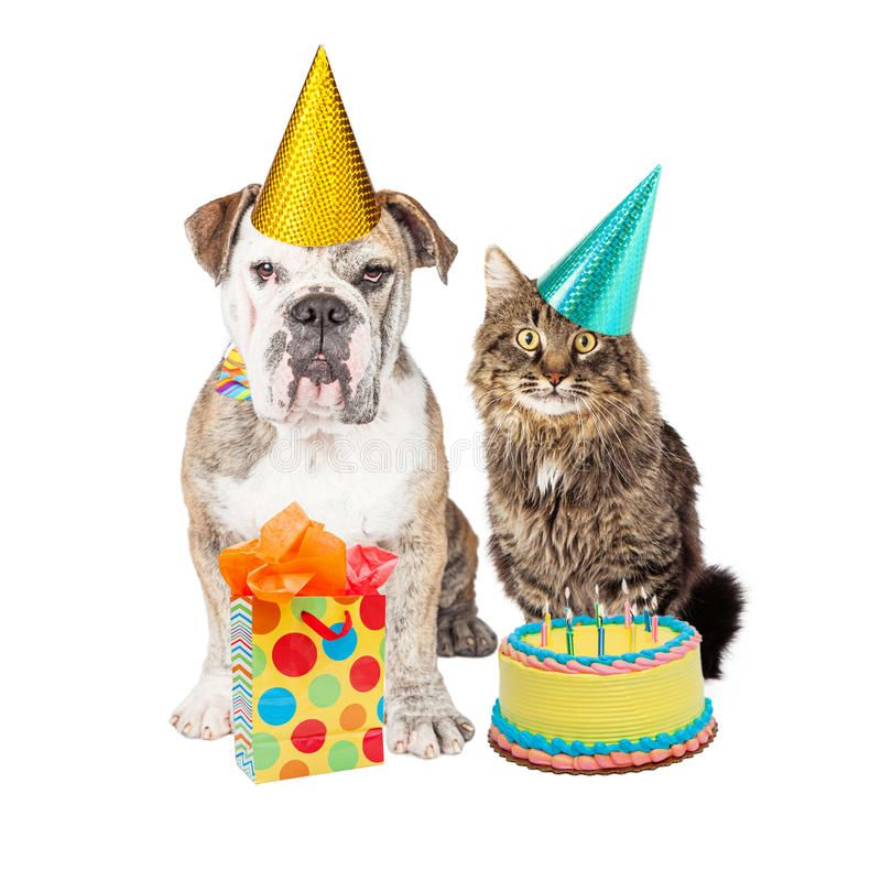 Download Birthday Party Cat And Dog Wearing Hats Stock Photo